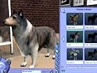 V�deo Los Sims 2 Mascotas: