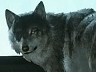 Metal Gear Solid V: The Phantom Pain - Tr�iler de Diamond Dog