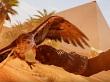 Assassin's Creed Origins: esperan vender más que Syndicate, menos que Unity